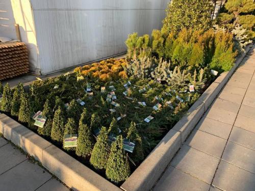 Zahrada jar 2021
